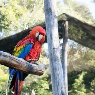 Vale a pena visitar o Gramado Zoo?