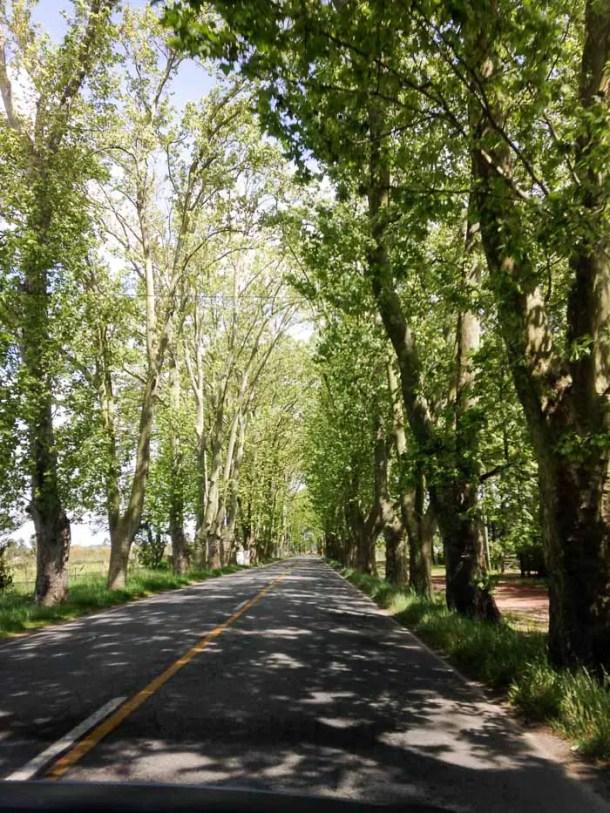 Carmelo no Uruguai - perfeita para o slow travel | Malas e Panelas