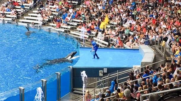 Show das baleias no SeaWorld Orlando