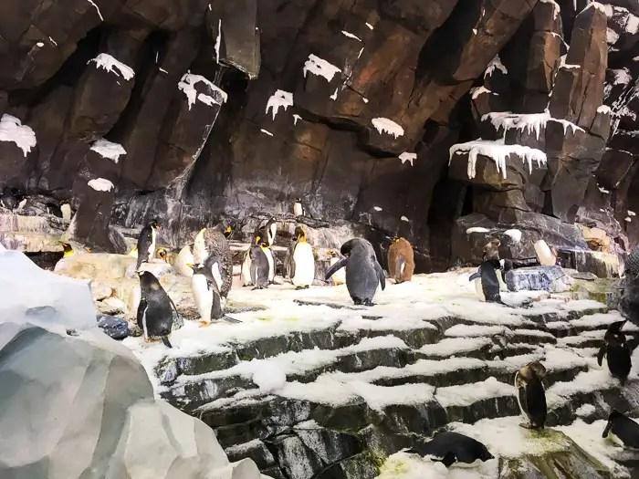 Pinguins no Empire of the Penguin no SeaWorld Orlando