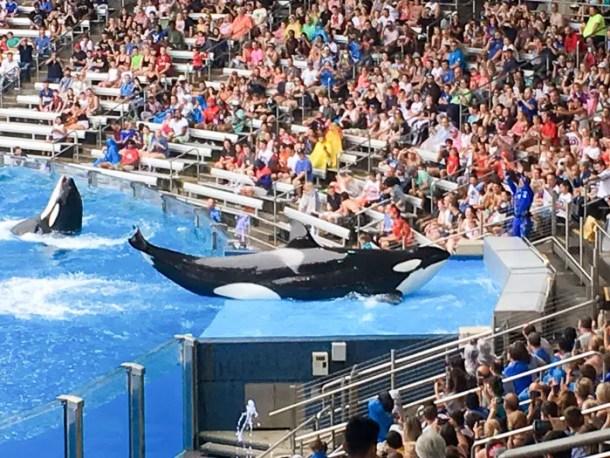 Show One Ocean SeaWorld Orlando