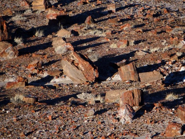 Jasper Forest - Petrified Forest National Park Arizona