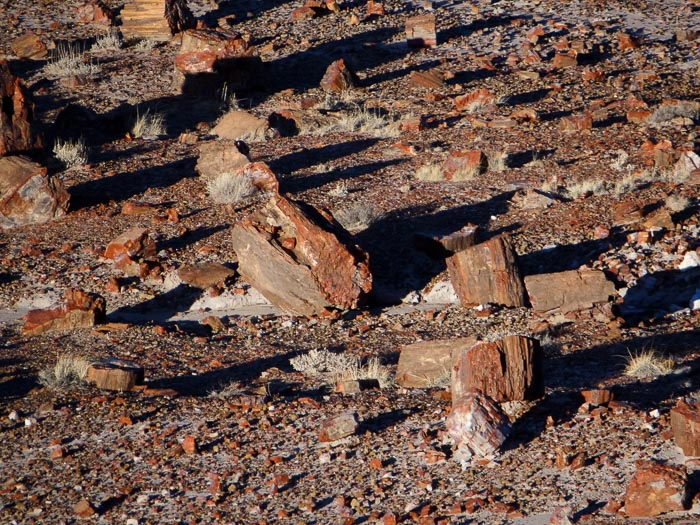 Jasper Forest - Petrified Forest National Park Arizona