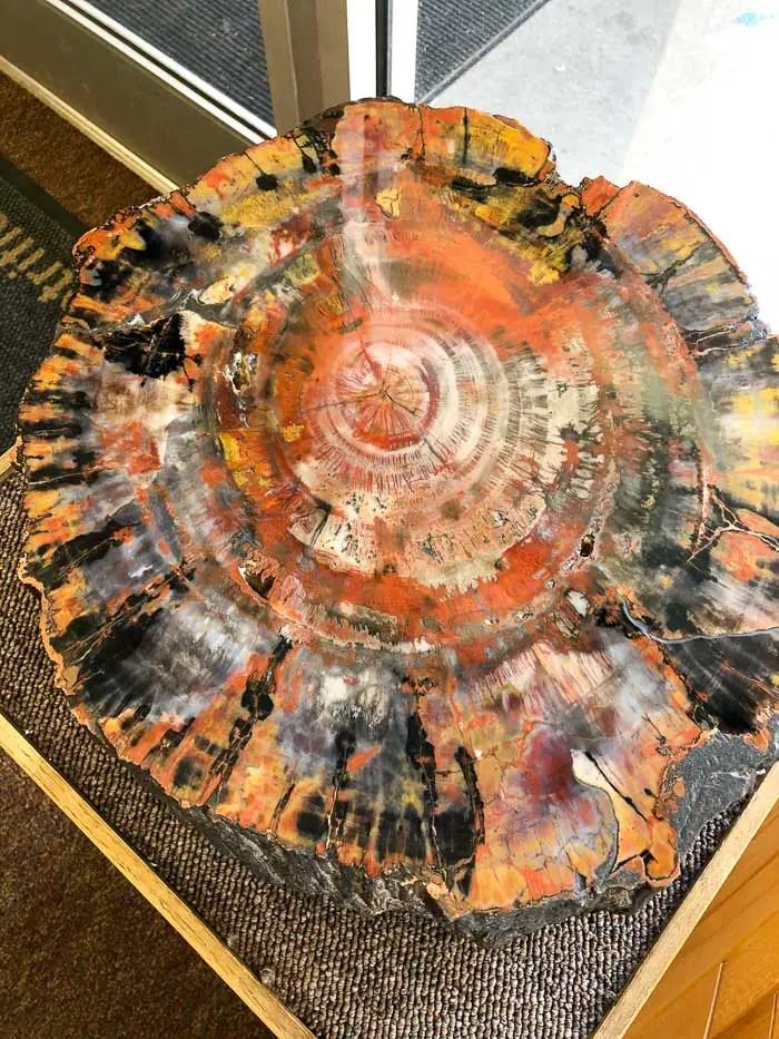 Tronco Petrificado no centro de visitantes do Petrified Forest National Park