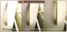 Malassezia Biofilm Transfer on Items1-MQ