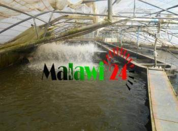 Chambo Fisheries Pond