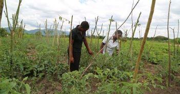 Farming is big business in Diamphwe