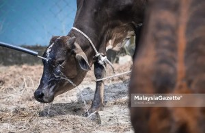 The Department of Veterinary Services (DVS) has suspended the import of beef and buffalo meat from Thailand with immediate effect after assessing the risk of the Lumpy Skin Disease (LSD) that has infected 41 Thai territories