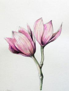 06. Velocidades para desenho com um lápis bonito e pulmões