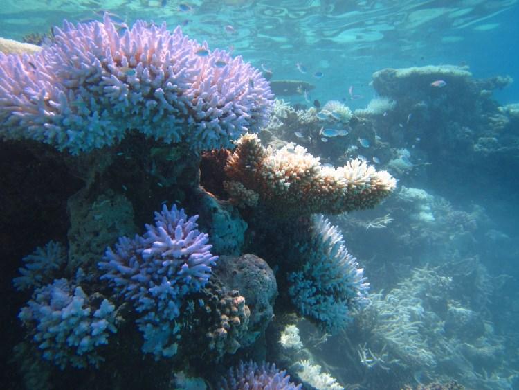 coral garden escursione
