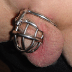 Lion's penis in Jail Bird chastity device