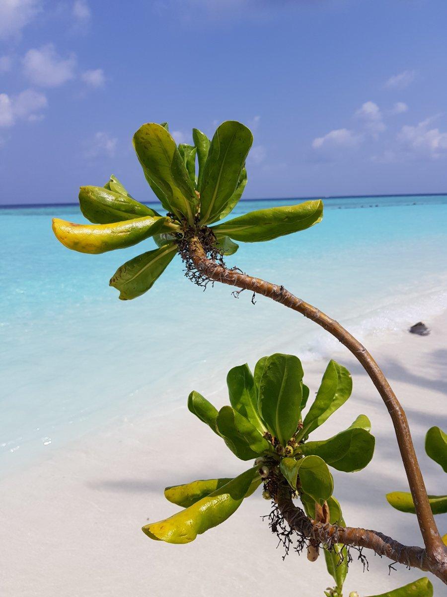 Ein Wunderschöner Tag Im Paradies Die Malediven