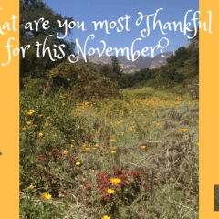 20 Reasons To Be Thankful In November 2018