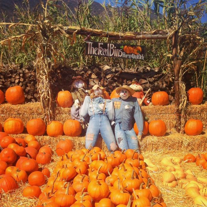 Happy Halloween! – The Malibu Feed Bin Pumpkin Patch