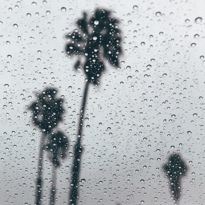 rainy-malibu-day-palm-trees-by-lifeofchasen-11-26-2016-1