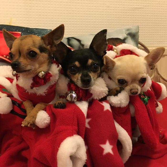 10 Cute Puppies on Santa's Nice List
