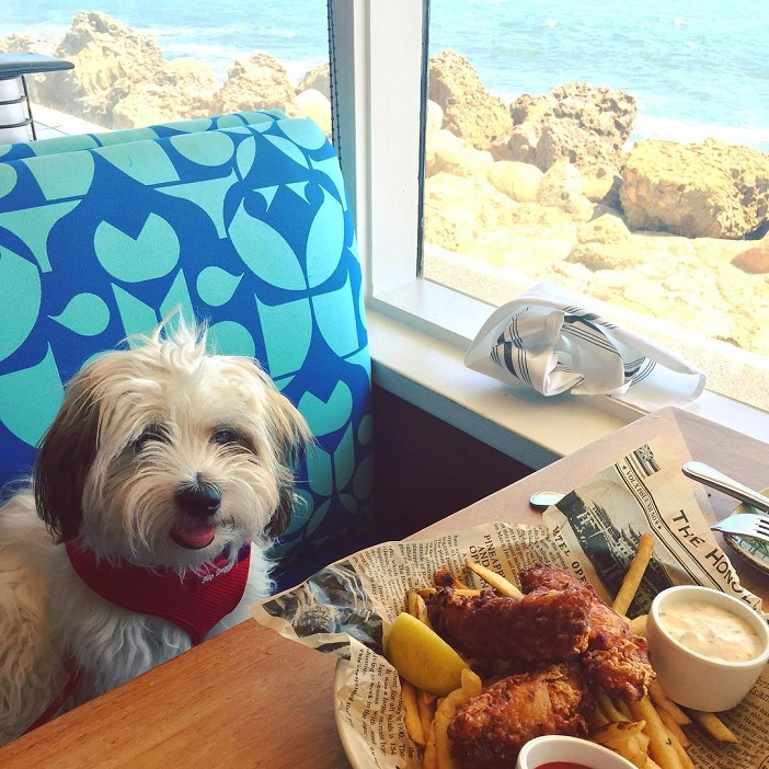 Island Life on the Mainland at Duke's Malibu Restaurant