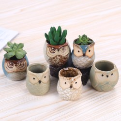 Little Owls Ceramic Succulent Bonsai Planter Pots Set of 6 by Rose Create