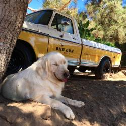 Billy the Kid (Puppy🐶) Chillin on the Job at One Gun Malibu Ranch