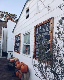 Pumpkin Season at the Malibu Farm Cafe on the Pier