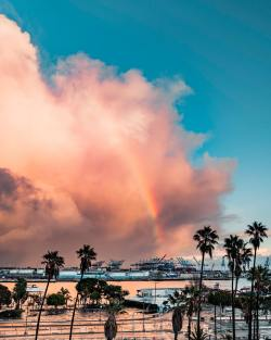 Palm Trees & Rainbow in San Pedro California