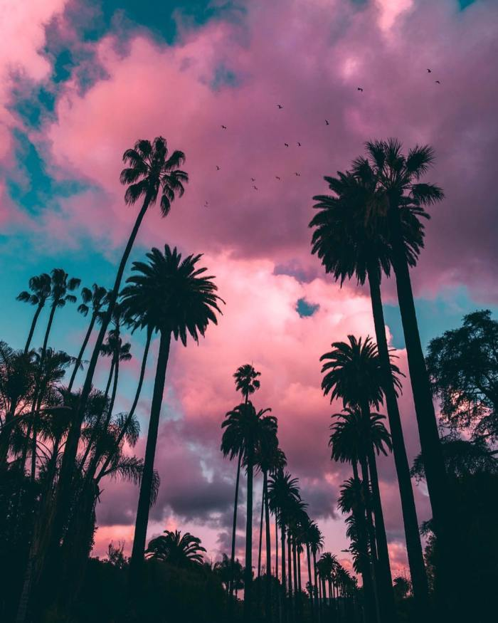 Palm Trees – Beverly Hills, California