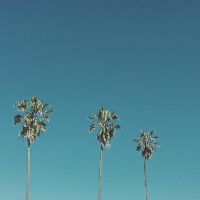 Palm Trees – Venice, California