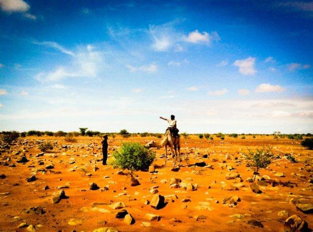 camel-mauritania