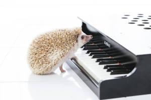 ピアノの鍵盤を触っているハリネズミ