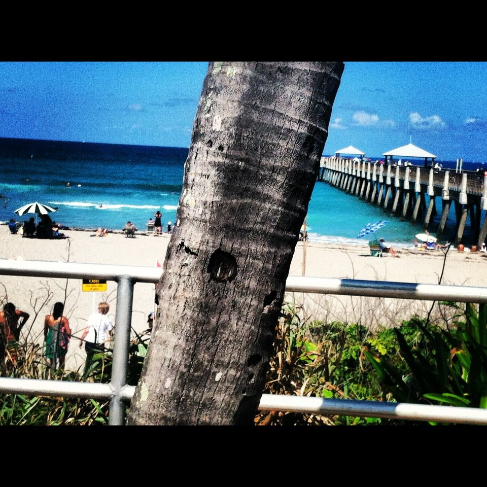Instagram by Malinda Knowles, Jupiter Beach Florida