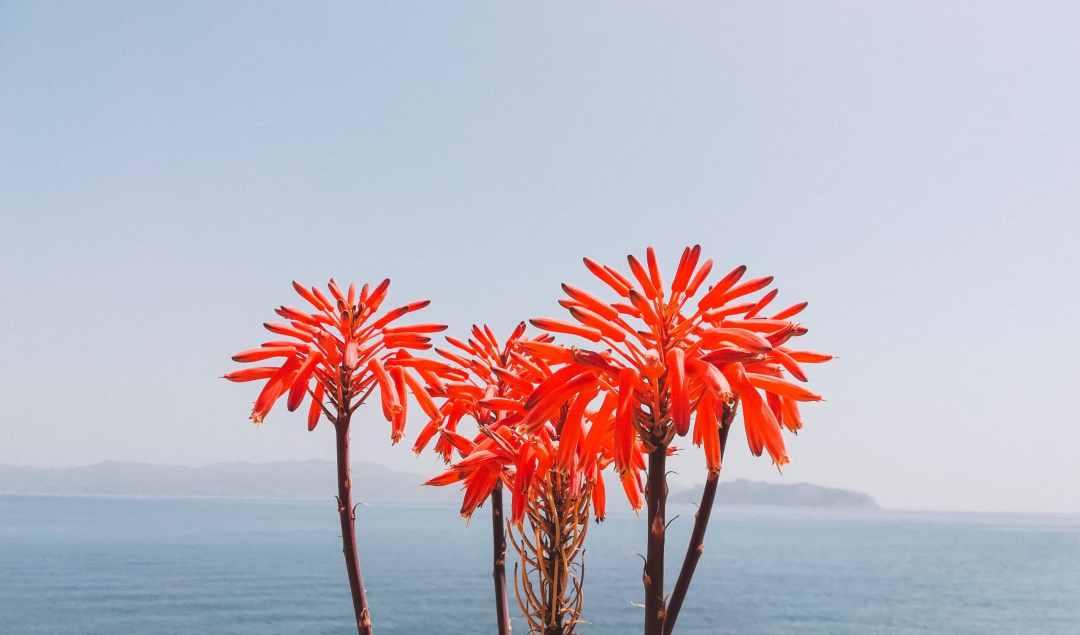 Greek Island Yoga Retreat spring flowers