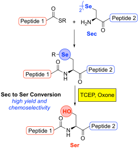 Graphical Abstract Oxidative Deselenization