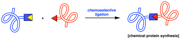 Protein ligation website Scheme