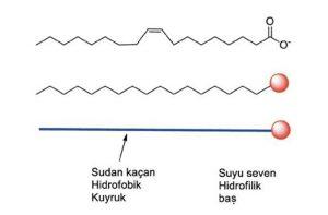 Yüzey Aktiflerin Genel Yapısı