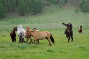 Pastor nómada en Mongolia dirigiendo a un grupo de caballos. (Fuente: Pixabay)