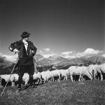 A lana, a ovella ansotana y o P.N. d'as Vals Occidentals
