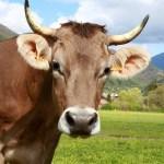 Uso y conservación de pastos: oportunidades y amenazas de la ganadería extensiva