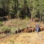 Innovación social en ganadería ecológica para revitalizar el medio rural