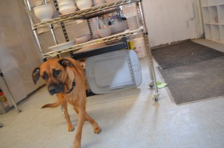 Roscoe, the studio rescue dog.