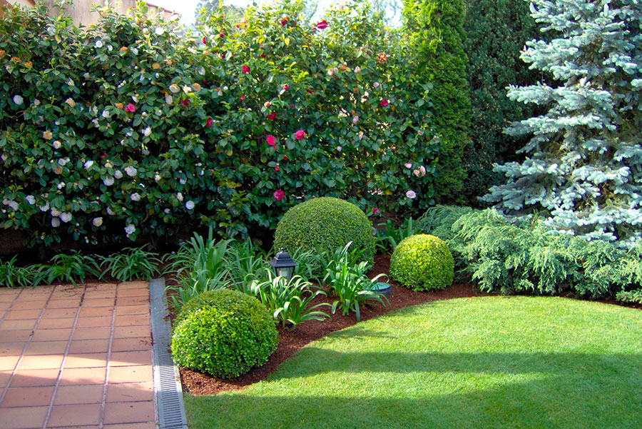 combinación-diferentes-especies-arbol-planta-césped-paisaje