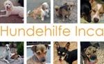 Hunde hilfe Inca - Ingrid Mauer (Mallorca)