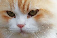 Katze Mirjam_1