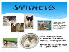 Katzen suchen ein neues Zuhause