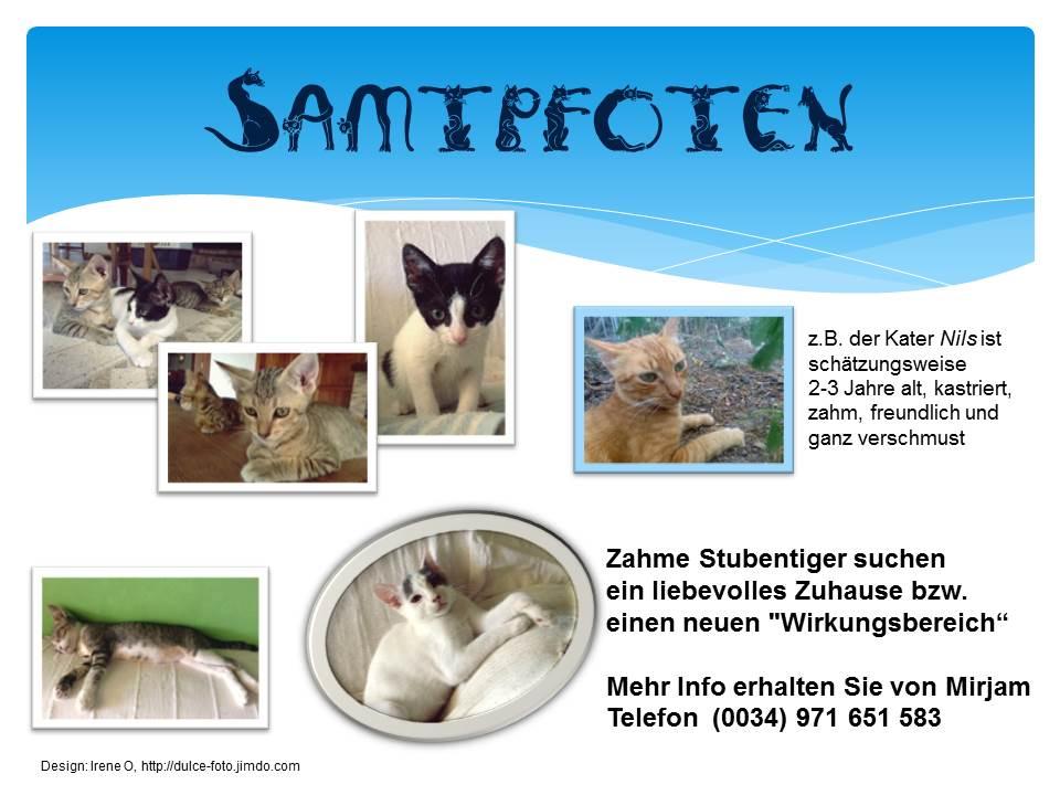 Mirjam´s Katzen suchen ein neues Zuhause