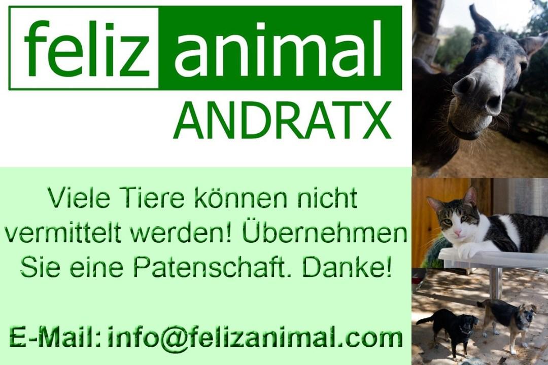Feliz Animal Andratx