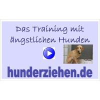 Das Training mit ängstlichen Hunden (Webinar)