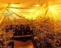 20140129 op green beret marihuana1