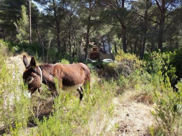 260517 burros en capdepera 3
