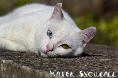 Kater Snowball