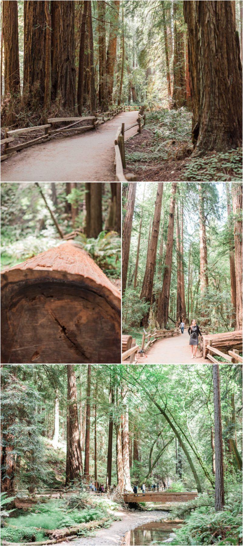 Muir Woods Redwoods in California